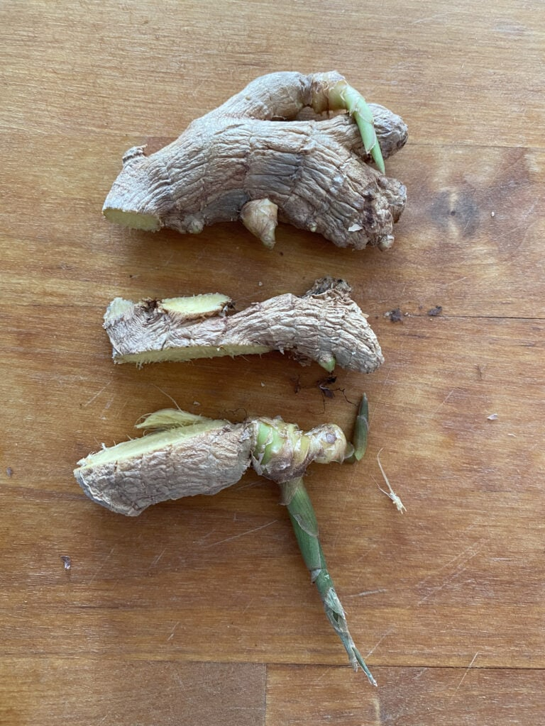 Sprouting ginger